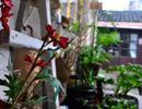 235社与CAFE PLANT共拥有的一个小庭院 满堂绿植