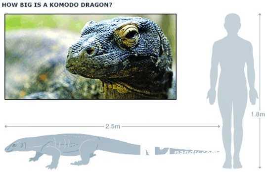 研究者在分析了数百种动物毒液后认为,蛇类和蜥蜴类的毒液是在大约1.