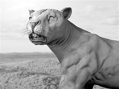 令这种巨型动物灭绝