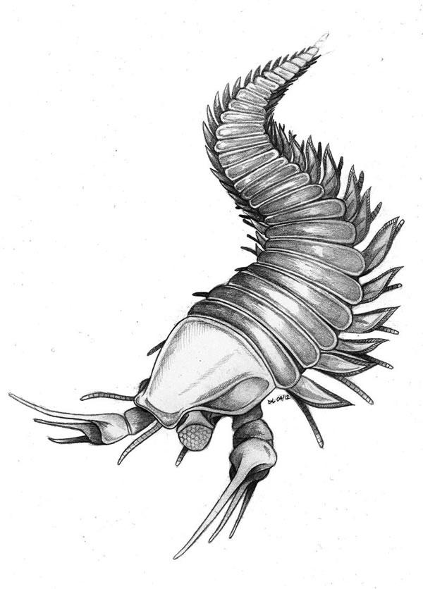 ... 剪刀手 命名寒武纪生物化石