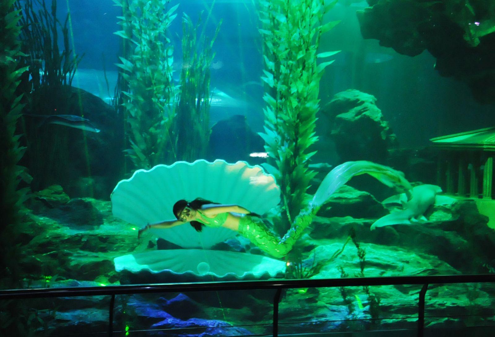 青岛的海底世界_青岛海底世界水族馆有啥-