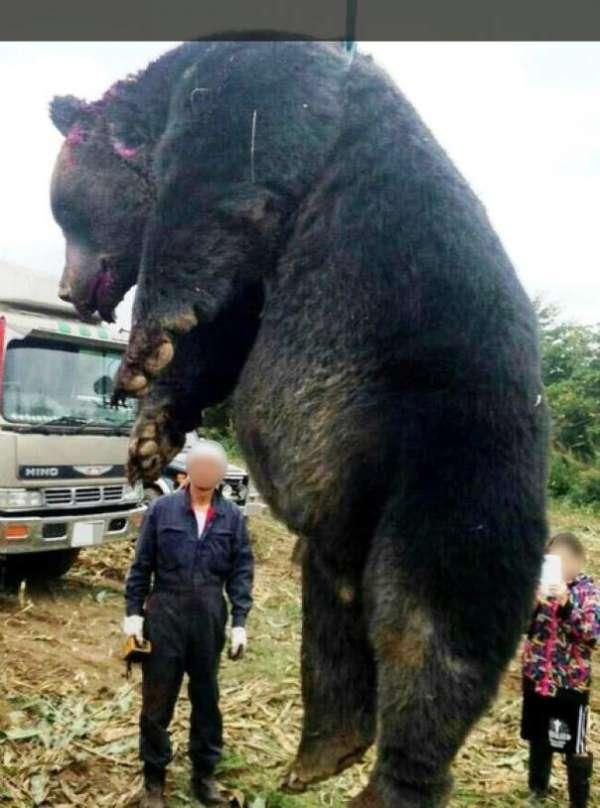 农场_3米高巨熊闯农村被射杀 7旬猎人:没见这么大的(图)_海南频道 ...