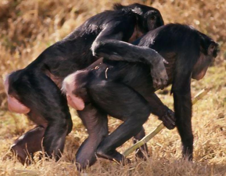 Homosexuelle Tiere