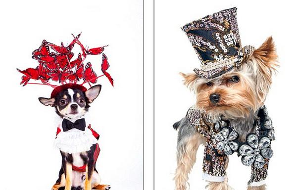 紐約寵物服裝設計大師安東尼·魯比奧(anthony rubio)就專們為寵物狗