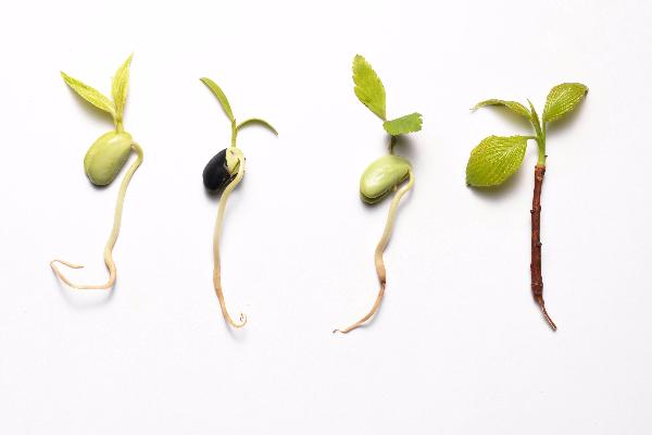 开春多吃4种菜健康又养生