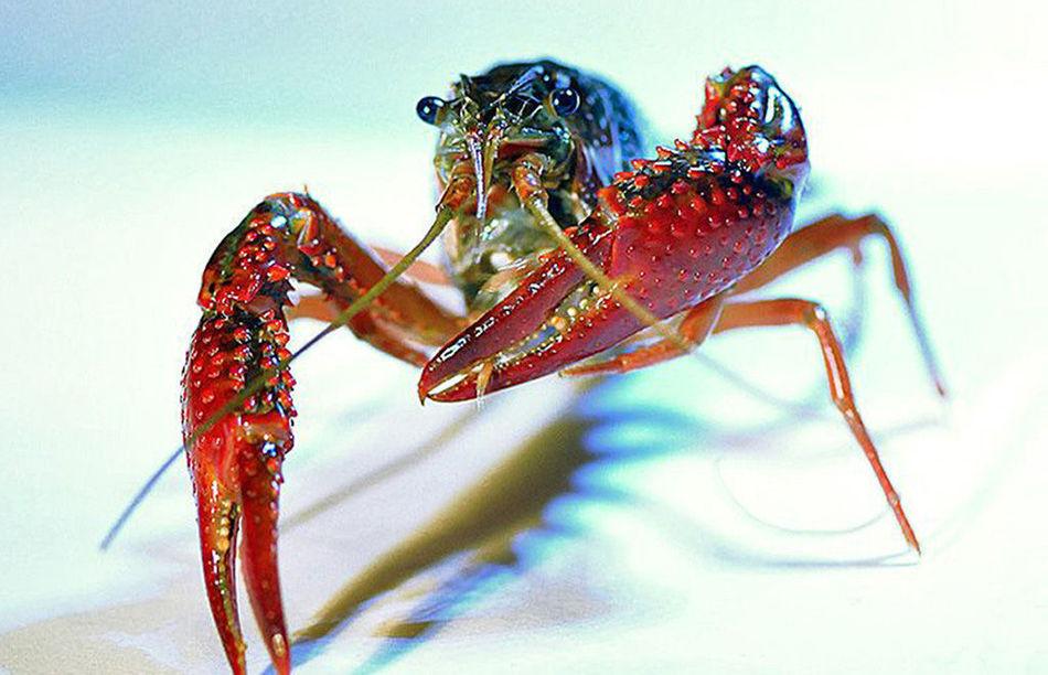 小龙虾经济总量2000多亿元_麻辣小龙虾图片